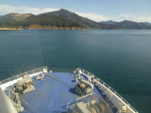 Another ship: Cook Strait Ferry going into Marlborough Sound!